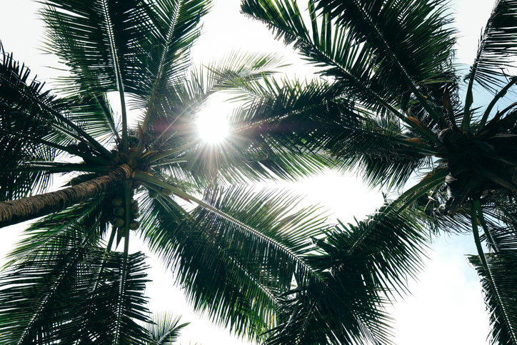 Palm Trees Lee's Nursery Rock Hill, SC
